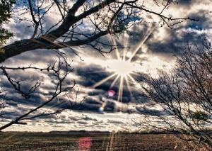 Susan Pigott's starlit pasture